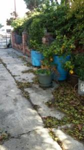My sad garden